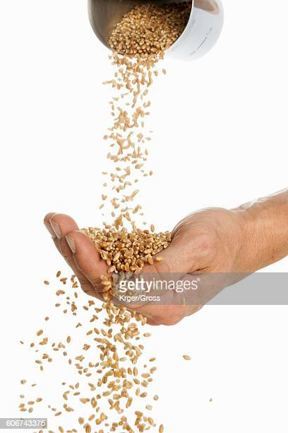 Someone pouring wheat into their hand