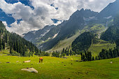 Sonamarg landscape with red hourse