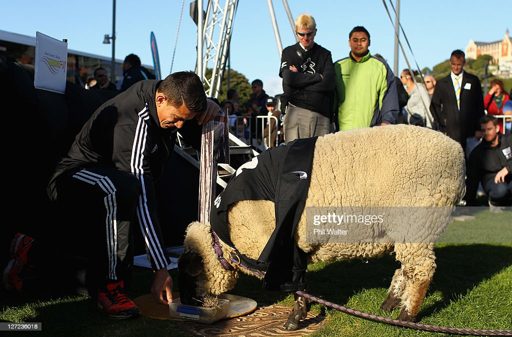 Sonny Bill Williams of the All Blacks feeds a sheep named Sonny Wool during a New Zealand All Blacks IRB Rugby World Cup 2011 fan day at Waitangi...