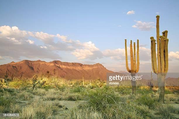 Deserto de Sonora