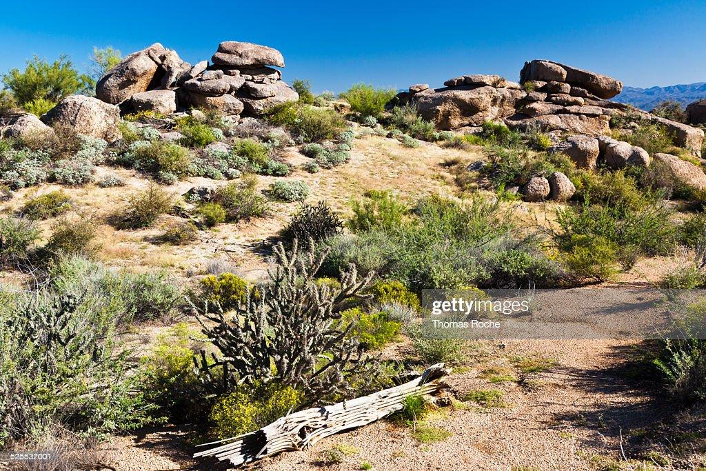 Sonoran Desert view in Arizona
