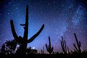 Celestial magic in the night sky above Saguaro National Park, Arizona.