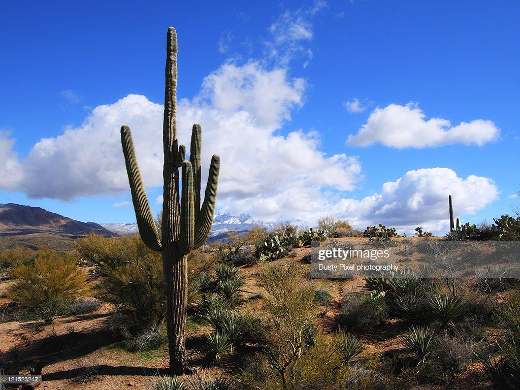 Sonoran winter
