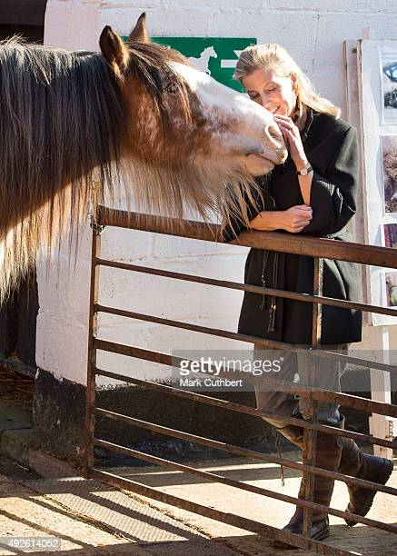 Sophie The Countess Of Wessex with a blind rescue horse during a visit to Remus Memorial Horse Sanctuary on October 14 2015 in Ingatestone Essex