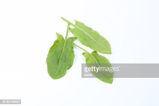 Sorrel herb green : Foto de stock