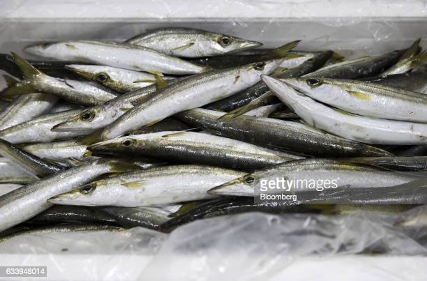 Sorted fresh fish sit in a box at CSN Chihou Sousei Network Co's fish processing and distribution center in the restricted zone of Haneda Airport in...