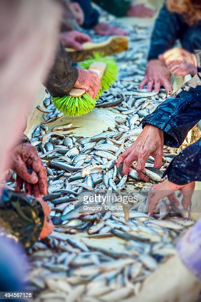 Sorting by hand fishes after catch of fish from pond