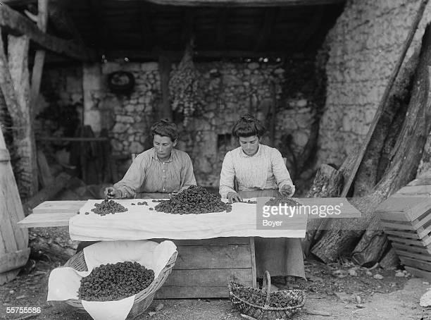 Sorting of Agen's prunes France by 1910 BOY939