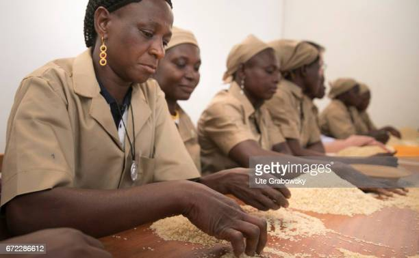 Sorting out impurities from the paddy Production of Parboiled Rice in a rice processing plant of the Dreyer Foundation in Dano on February 28 2017 in...