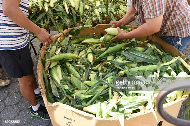 Sorting through corn Union Square Park greenmarket is one of New York City's largest and oldest dating back to 1976