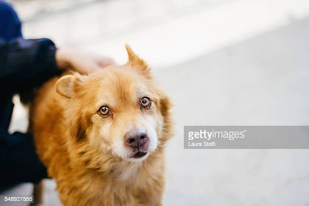 Soulful dog close to woman looks at camera