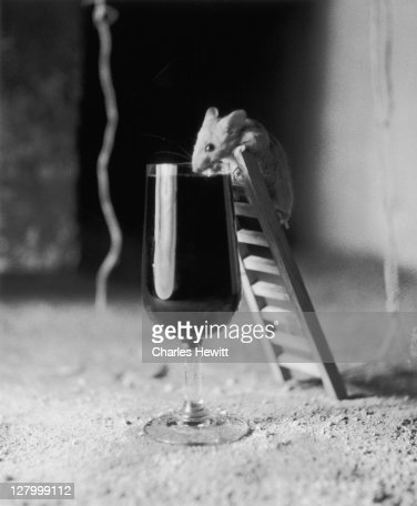Soused Mouse