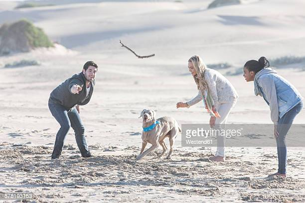 South Africa, Cape Town, three friends playing on the beach with dog