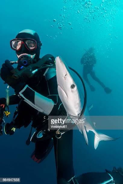 South Africa, Ocean, Diver with blue shark