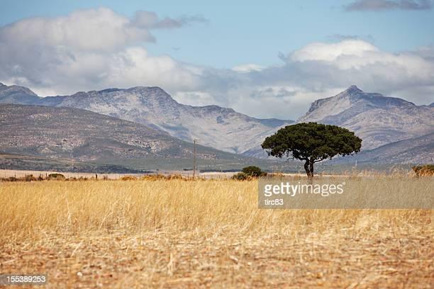 L'Afrique du sud sur la campagne du Garden Route
