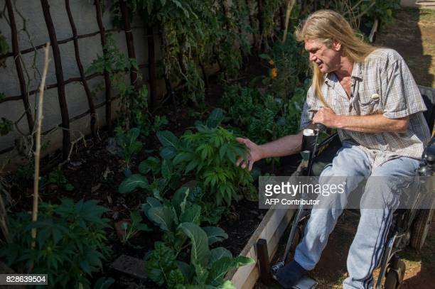 South African Gerd Bader affected by Multiple Sclerosis and who manufactures concentrated cannabis oil shows his marijuana plants from which he...