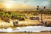 Dreamy scene of common South African safari wildlife animals together at sunset