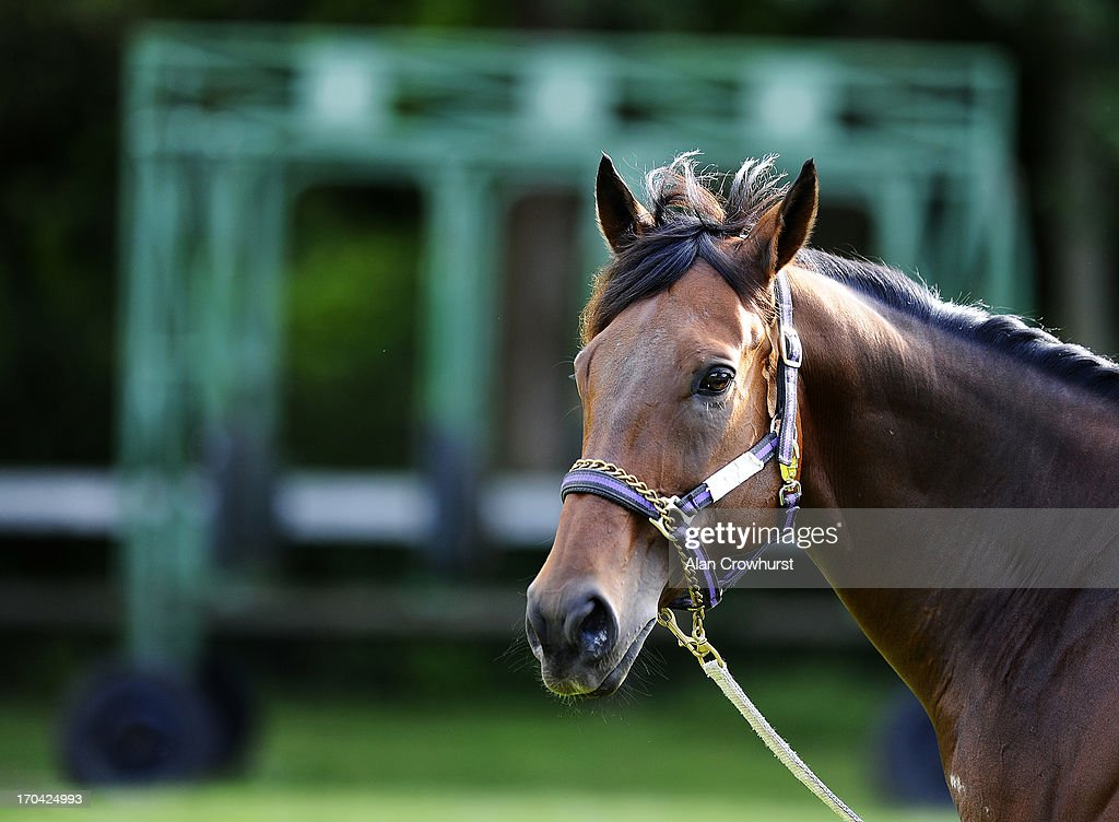 South African trained Shea Shea on June 13, 2013 in Newmarket, England.