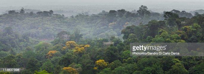 South America, Amazon Rainforest