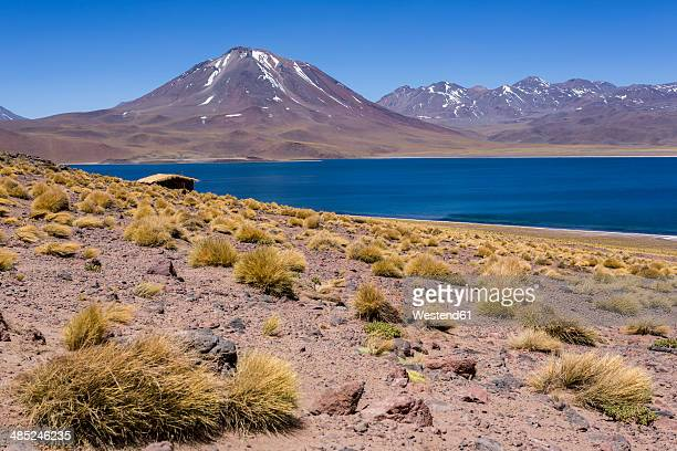 South America, Chile, Atacama Desert, Laguna Miscanti, in the background Andes