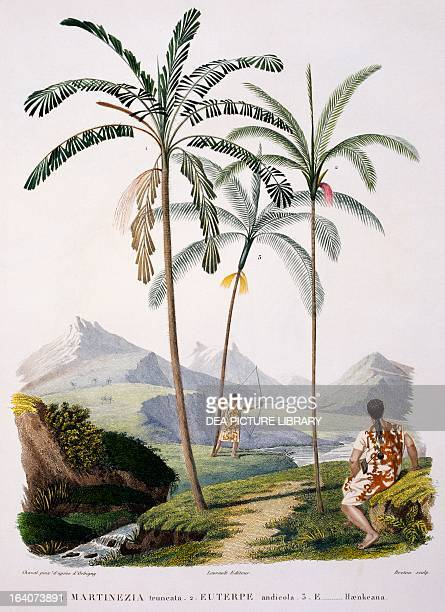 South American mountain palm trees engraving from Voyage to south America by Alcide Dessalines d'Orbigny Table II 1847 South America 19th century...