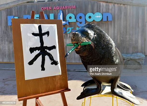 South American Sea Lion or Otaira 'Leo' practices his calligraphy drawing the Chinese character of 'Sheep' ahead of the Year of Sheep zodiac sign of...