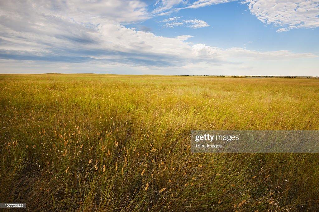 USA, South Dakota, Buffalo Gap National Grasslands, Prairie grass