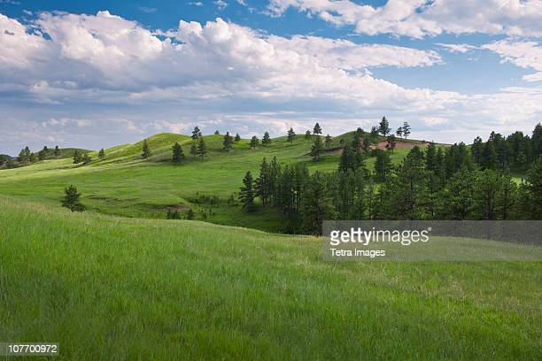 USA, South Dakota, Meadow in Custer State Park