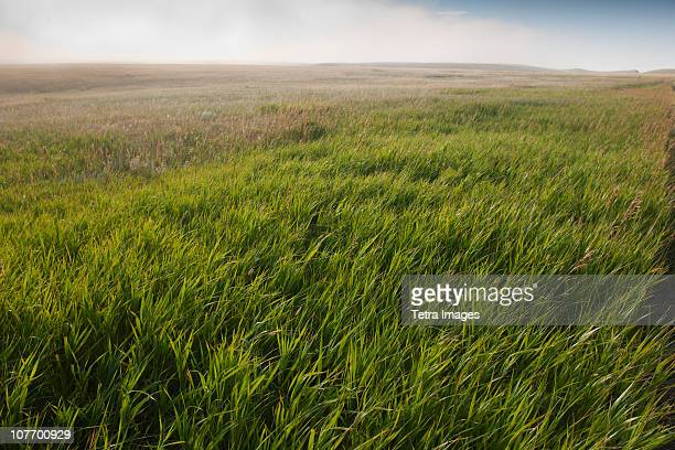 USA, South Dakota, Prairie grass in Buffalo Gap National Grasslands