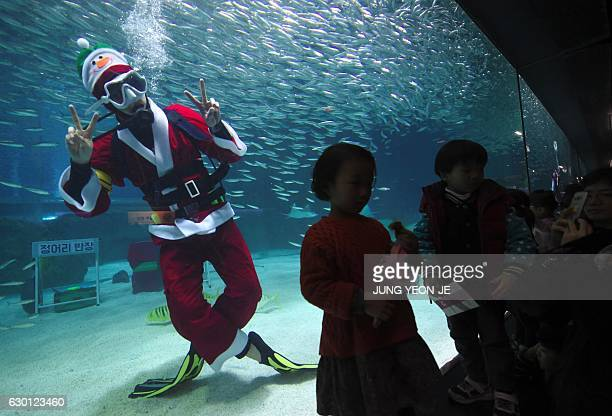 A South Korean diver wearing a Santa Claus outfit swims with fish in a tank during a Christmas event at the Coex Aquarium in Seoul on December 17...