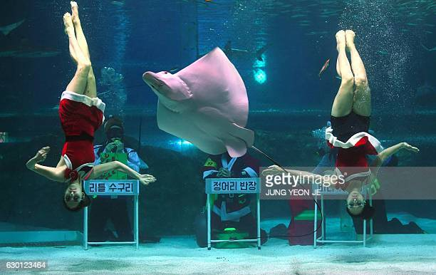 South Korean divers wearing Santa Claus dresses perform amongst fish in a tank during a Christmas event at the Coex Aquarium in Seoul on December 17...