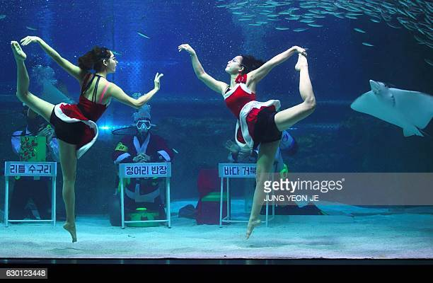South Korean divers wearing swimsuits resembling Santa Claus perform with fish in a tank during a Christmas event at the Coex Aquarium in Seoul on...