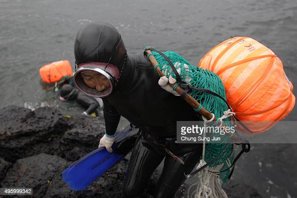 South Korean haenyeo exit the water after catching turban shells and abalones while diving on November 6 2015 in Jeju South Korea 'Haenyeo' or Sea...