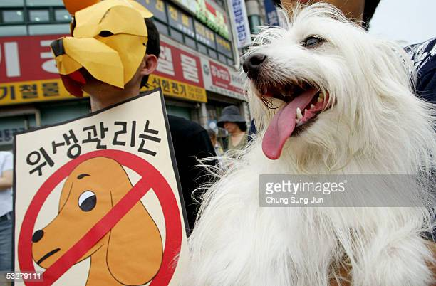 South Korean member of the People for The Ethical Treatment of Animals holds a dog as another wears a dog mask and carries a placard during a protest...