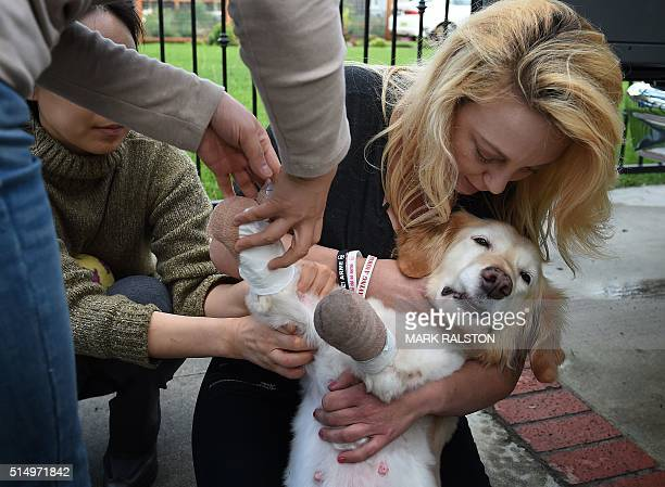 South Korean veterinarian Dr Lee Mikyong who rescued Chi Chi the Golden Retriever after she was tortured and left for dead in a trash bag in South...
