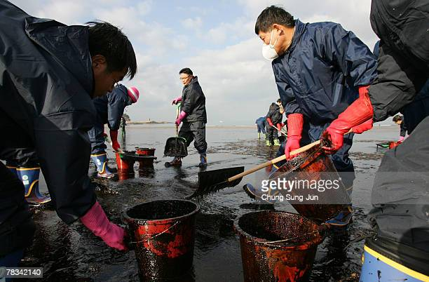 South Korean's make efforts to remove the crude oil spilled over the beach following a tanker accident on December 9 2007 in Taean South Korea...
