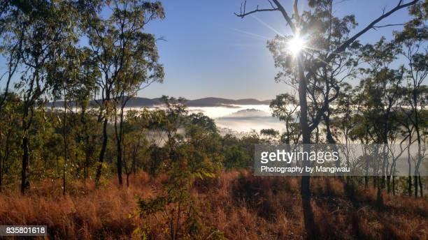 South Palmer Mist