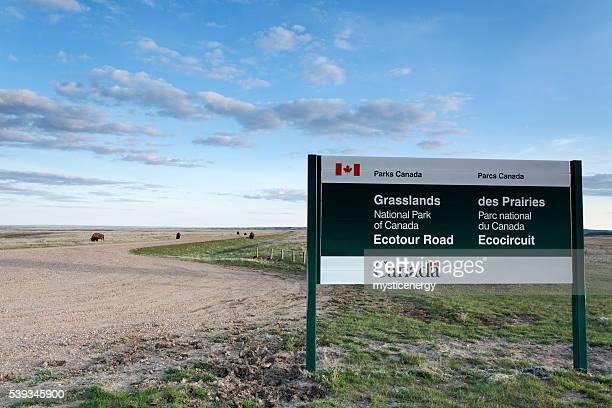 Parc National des Prairies Saskatchewan-Sud canada