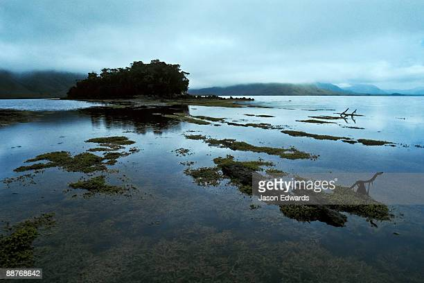 Gloomy rock Pools covered in Neptune's Necklace exposed at low tide.