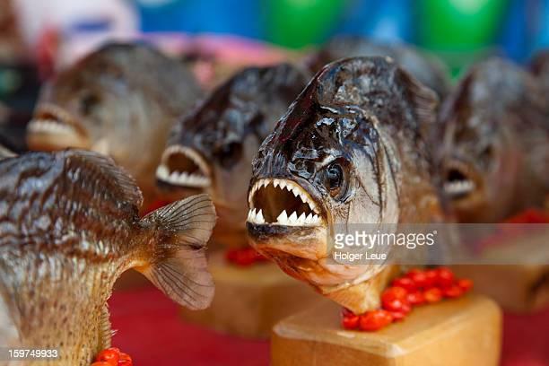 Souvenir piranhas for sale at market