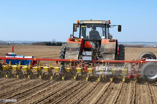 Sowing of beet