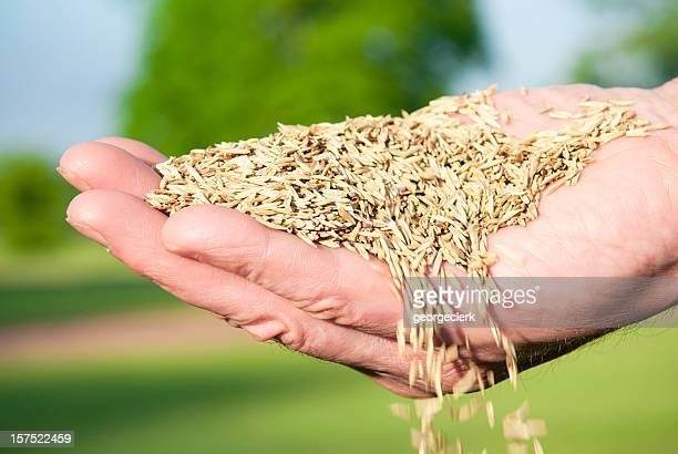 Sowing Seed By Hand