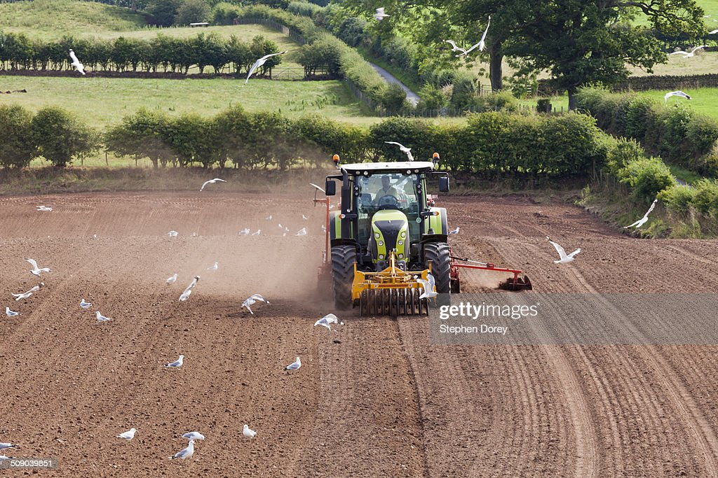 Sowing with a tractor and seed drill