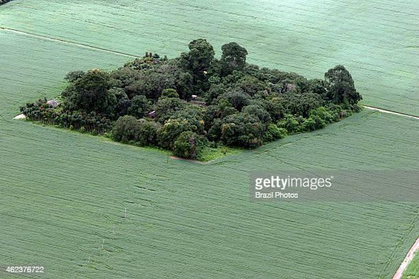 Soy plantation in Amazon rainforest near Santarem deforestation for the agribusiness economic development creating environmental degradation small...