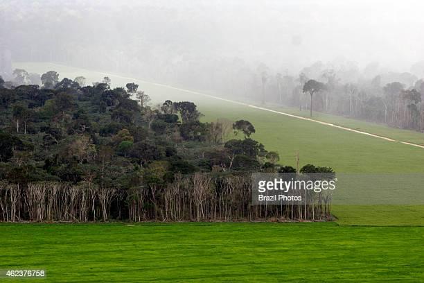 Soy plantation in Amazon rainforest near Santarem deforestation for the agribusiness economic development creating environmental degradation