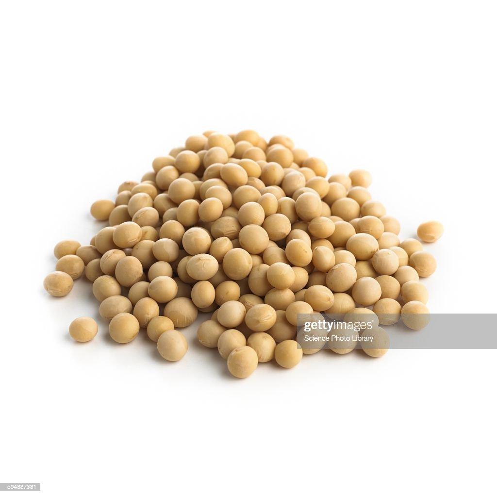 Soya beans : Foto stock