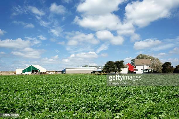 XXL soja farm