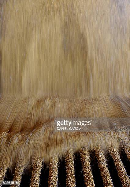 Soybean is unloaded from a truck before being sent to a silo according to its humidity at the company Campo Noble in the locality of Perez Millan 200...