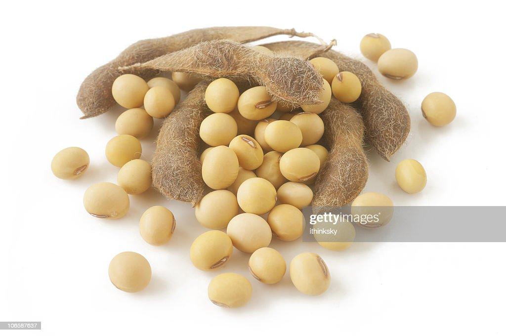 Fagiolo di soia : Foto stock