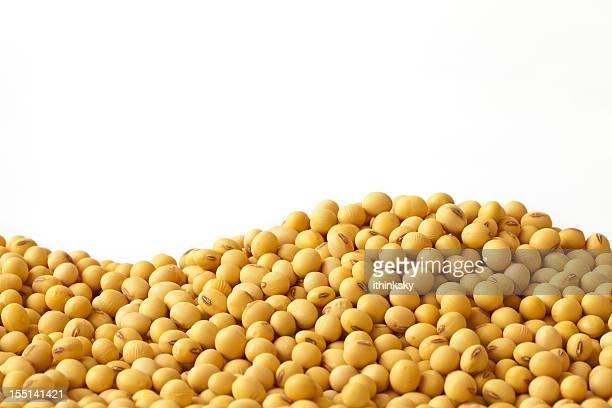 Haba de soja